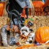 Howloween Pictures are on the Photos Page – click top blue bar on PHOTOS